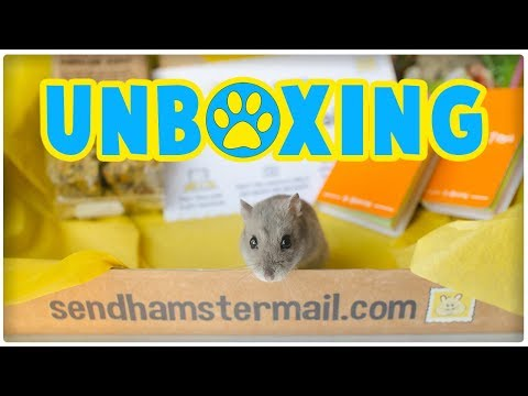 Hamster Mail Unboxing   New Monthly Subscription Box Service!