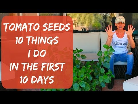 10 Tips On Growing Tomatoes From Seed - Growing Tomatoes In Arizona