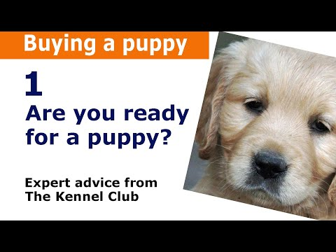 Buying a puppy or dog | Kennel Club expert advice