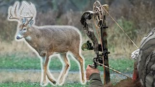 Top 5 Deer Hunting Tips For Ground Setups!