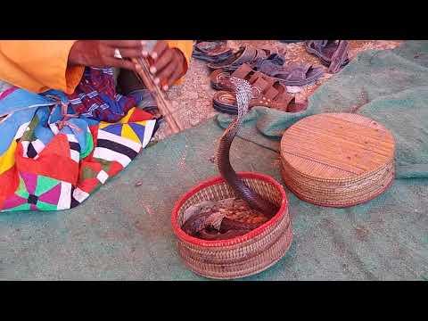 Snake magical show in Keenjhar lake, Sindh Pakistan