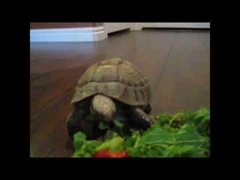 New Tortoise