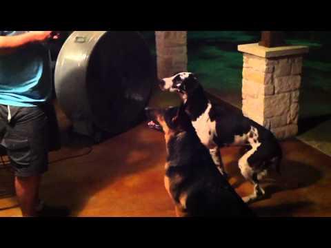 Dogs get rib bones