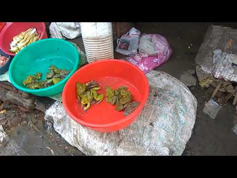 Nagaland Market Selling  Snakes, Rats, Squirrels, Dogs, Cats, Spider