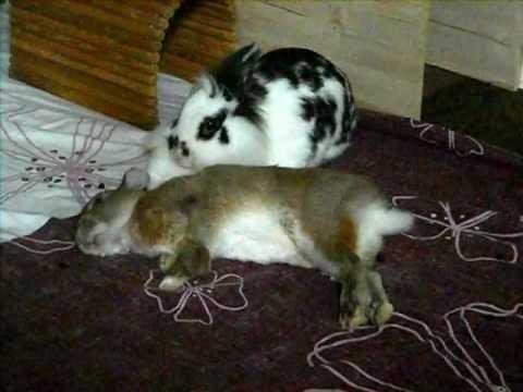 bunny falling asleep and dreaming