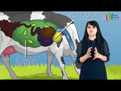 Class VII   Digestion in ruminants Segment 2 SD