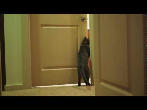 Oskar the Blind Cat Opening a Closed Door
