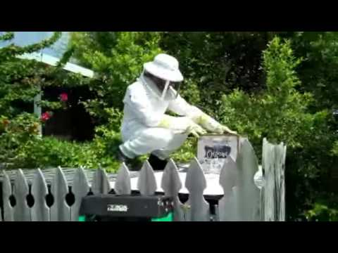 How to Catch a Honey Bee Swarm