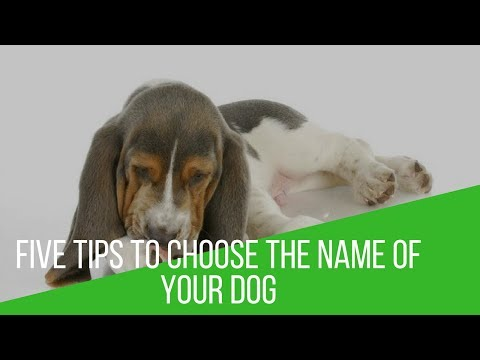 Five Tips To Choose The Name Of Your Dog