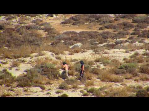 VIDEO UPDATE 2017-10-20 Havat Ma'on settlers' attack