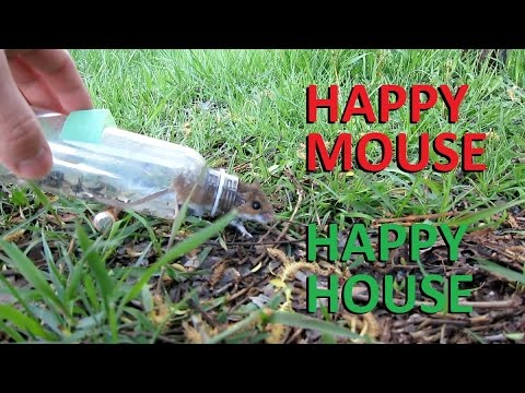 The evolution- DIY LIVE mouse trap (no magnets)