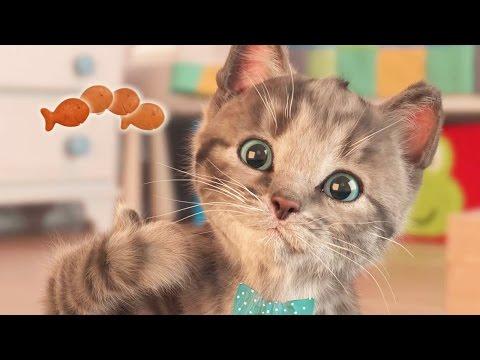 Little Kitten - My Cute Little Pet | Kittens Need A Home!