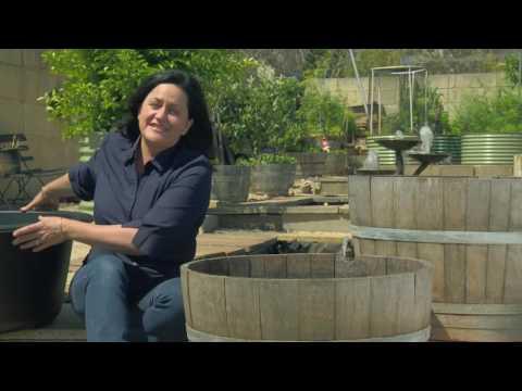 The Garden Gurus - Wine Barrels as Ponds