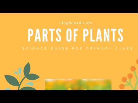 Parts of Plants | Roots,  Stem,  Leaves,  Fruits