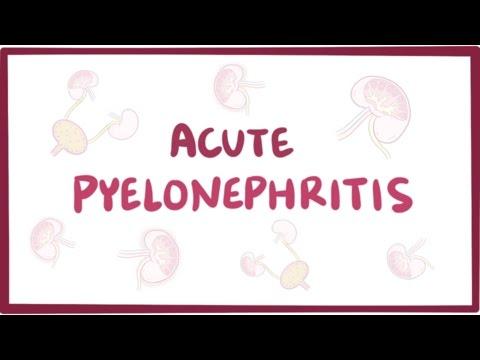 Acute pyelonephritis (urinary tract infection) - causes, symptoms & pathology