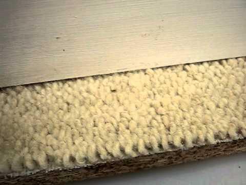 Bed Bugs on Carpet - Rentokil