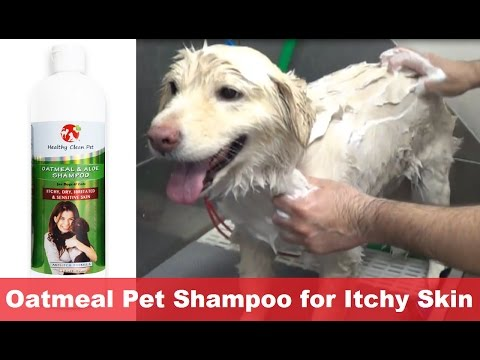 Oatmeal Dog Shampoo for Itchy Skin by Healthy Clean Pet