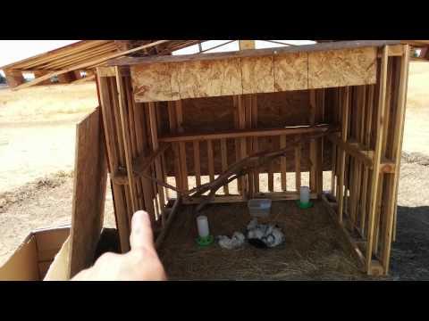DIY Pallet Chicken coop For Free Range Chickens