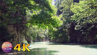 Spring river - Relaxing river sounds - Sound of water Birds