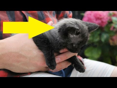 A Couple saved This Lost Kitten, They Were Stunned When Its Fur Started To Change Color