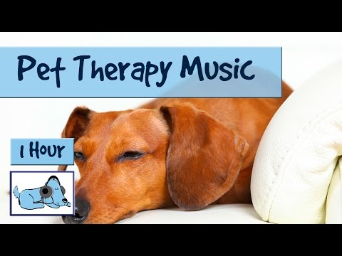 Pet Therapy - Music for Dogs, Relaxing Therapy Music to reduce anxiety , De-stress your Dog