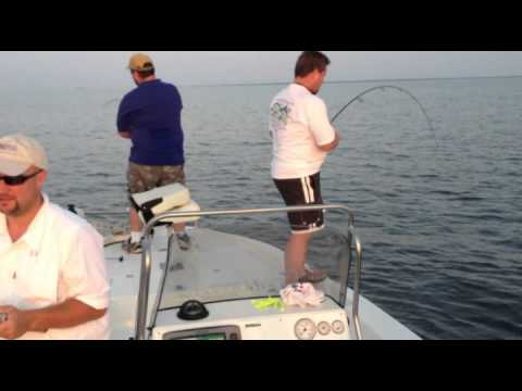 LA Schooling Redfish.mp4