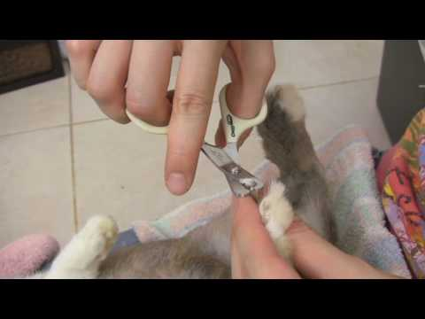 How to Trim your Rabbit's Nails - Teeny's Tips