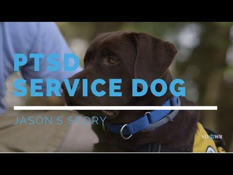 PTSD Service Dog: Jason's Story