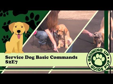Service Dog Basic Commands S2E7