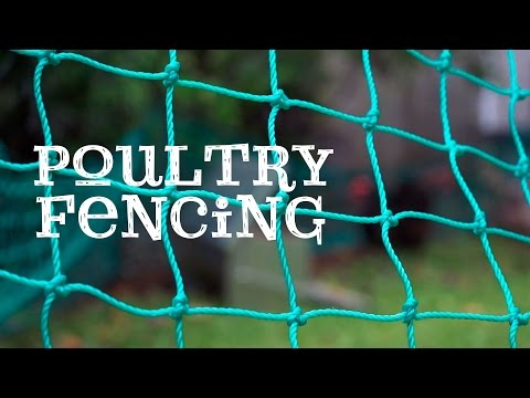 Poultry Fencing - Free range chickens in your backyard!