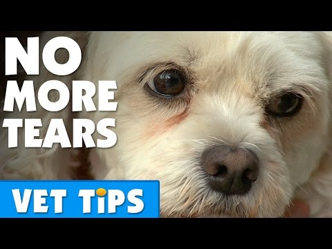 How To Clear Up Tear Stains On A Dog | Bondi Vet