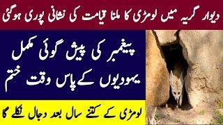 Dewaar Girya Main Fox Ka Milna Bhi Sabit Hogya