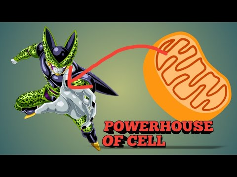 Mitochondria - The power house of cell