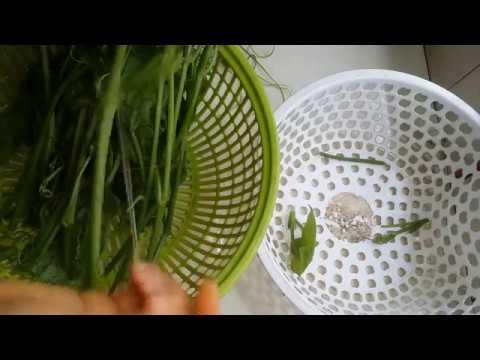 Cách tước ngọn su su nhanh và đơn giản để làm món su su xào tỏi!