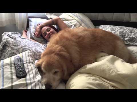 Fat dog won't let human get up