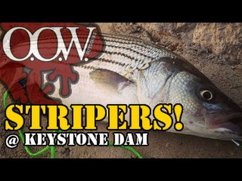 Striped Bass Fishing | Keystone Dam - OOW Outdoors
