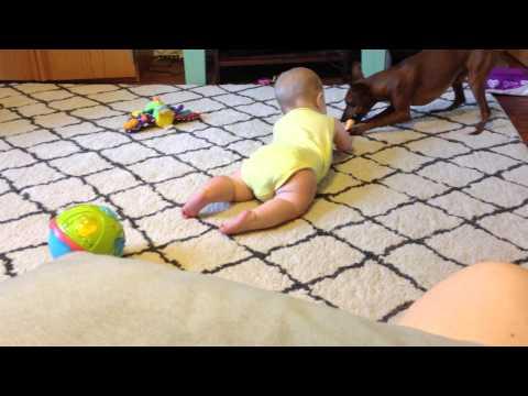 Baby Teaching Dog to Share : Dog Teaching Baby to Crawl