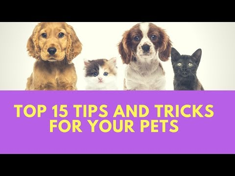 TOP 15 Tips and Tricks For Your Pets