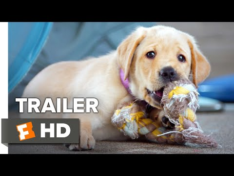 Pick of the Litter Trailer #1 (2018)   Movieclips Indie