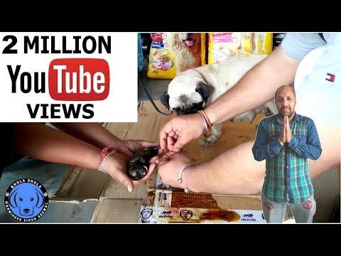 Pet Care - Pug Delivery - Bhola Shola