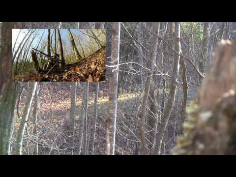 Great Gamelands Youth Turkey Hunt in NC