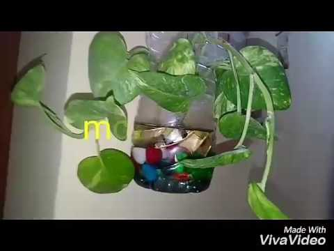 NO_19 Easy growing indoor plants  clean air/PurifyAir/Help to get more oxygen/Air filtering  plant