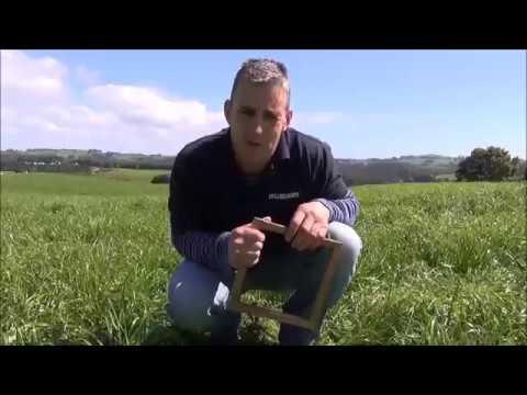 Pasture Health – Checking Plant Density   TIA Dairy Team