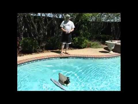 Keeping the Ducks away!!!.avi