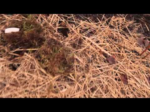 Permaculture in Iceland - late April video (outdoors) 2/2