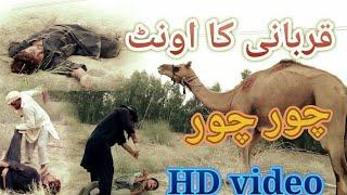 Mara Qurbani Ka Camel چور لے گیا Khan Lala Production