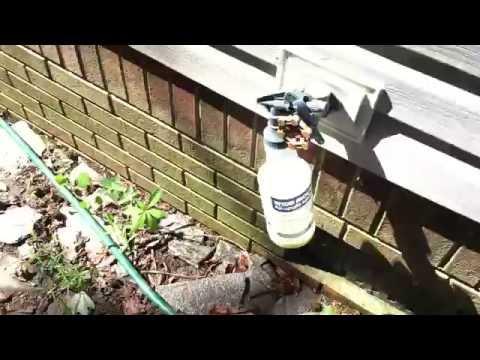 Flea Infestation in The Yard