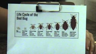 Bed Bug Infestation Timeline Videos Ytube Tv