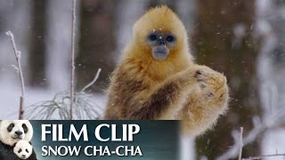 """Snow Cha-Cha"" Clip - Disneynature"