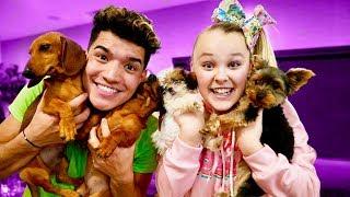 Download Christmas Puppy Surprise! (ft Jojo Siwa) Video